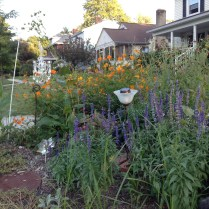 A rain garden at the corner of Chatham rd and Sharon ave