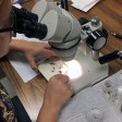 Sorting specimens from newly collected sample