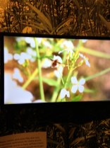 video screen display with bee
