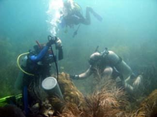 Ryan coral drilling in Puerto Rico