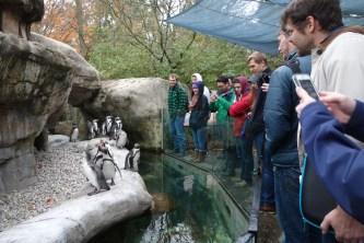 Penguins at the Columbus Zoo and Aquarium