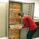Gisele puts drawers away in our temporary storage area at the Museum.