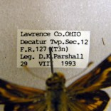 Detail of a specimen label in the Dave Parshall Butterfly Collection.