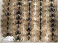 Oeneis bore mckinleyensis, aka White-veined Arctic butterfly