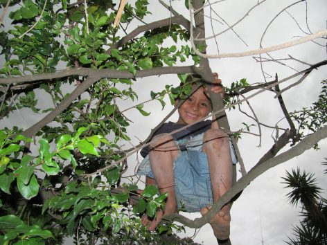 Kevin climbing a tree to run away from Missy.