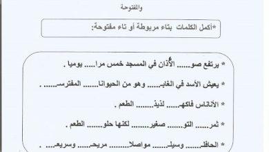 Photo of صف ثاني فصل ثاني ورق عمل لغة عربية التاء المربوطة والتاء المفتوحة