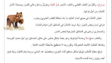 Photo of أوراق عمل شاملة لغة عربية صف رابع فصل ثاني