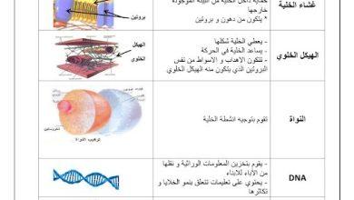 Photo of ملخص درس عضيات الخلية علوم صف سادس فصل ثاني