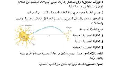 Photo of صف ثاني عشر فصل ثالث تلخيص أحياء تركيب الجهاز العصبي