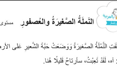 Photo of تدريبات فهم المقروء (قطعة وعليها أسئلة) لغة عربية صف ثالث فصل ثالث