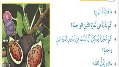 Photo of حل درس سورة التين التربية الاسلامية الصف الثالث الفصل الثالث