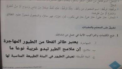 Photo of حل درس طائر القطا لغة عربية صف سابع فصل ثاني