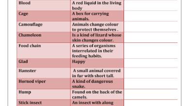 Photo of مفردات وورق عمل الوحدة العاشرة لغة إنجليزية صف سادس فصل ثالث
