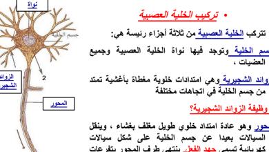 Photo of ملخص الجهاز العصبي أحياء صف عاشر فصل ثاني