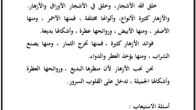 Photo of قواعد تدريبات الجملة الاسمية والفعلية لغة عربية صف خامس فصل ثاني