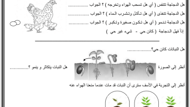 Photo of ورقة عمل درس النباتات كائنات حية علوم فصل أول صف أول