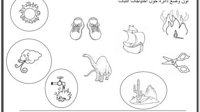 Photo of ورقة عمل درس أجزاء النبات علوم فصل أول صف أول