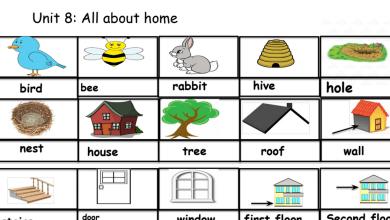 Photo of مفردات الوحدة 8 والوحدة 9 لغة إنكليزية صف ثالث