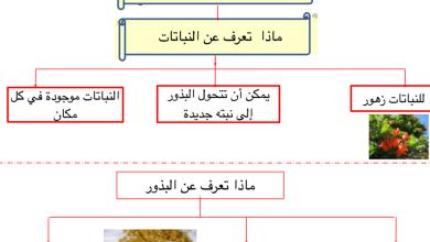 Photo of تلخيص وورق عمل وحدة النباتات علوم صف أول فصل أول