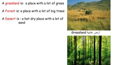Photo of ملخص البيئة البرية علوم منهج إنجليزي صف أول فصل ثاني