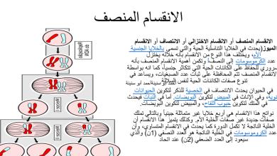 Photo of ملخص الانقسام المنصف أحياء صف تاسع متقدم