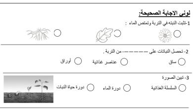 Photo of أوراق عمل شاملة علوم صف ثاني فصل أول