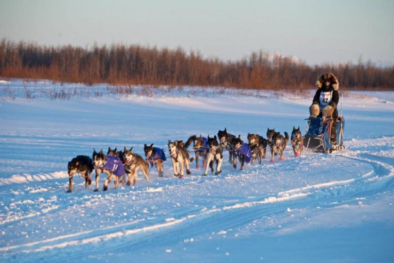 Image courtesy of Krista Heeringa An Iditarod sled dog team travels along a frozen river.