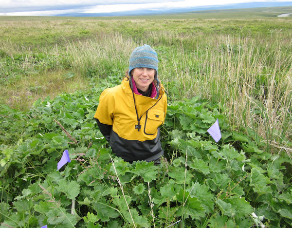 Breen samples post-fire tundra vegetation at the UAF Quartz Creek site on the Seward Peninsula of Alaska. (Photo by T. Hollingsworth)