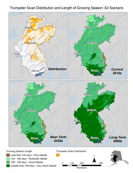 Even a few extra frost-free days can boost survival for young trumpeter swans. Maps created for the Yukon/Kuskokwim/Lime Hills Rapid Ecoregional Assessment.