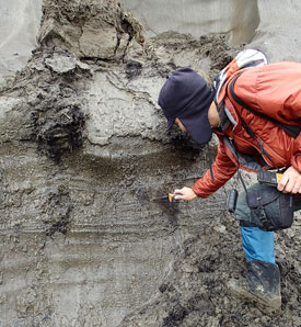 Iwahana examines large ground ice of the North Slope, Alaska. (Photo by M. Uchida)