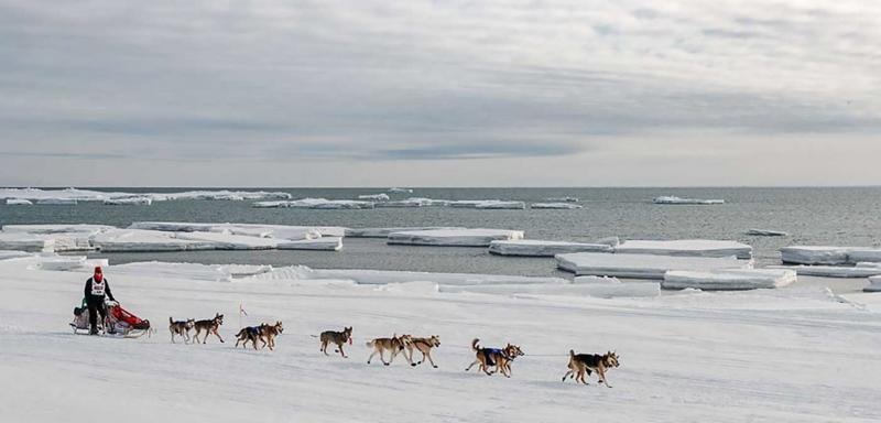 dog team running along sea ice in Alaska