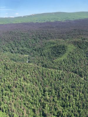 dead trees in alaska
