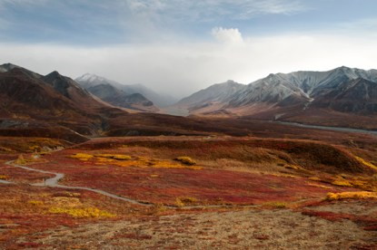 tundra in fall colors