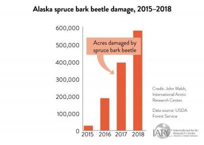 alaska spruce bark beetle damage graph