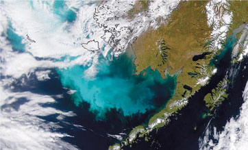 satellite image of phytoplankton bloom off alaska