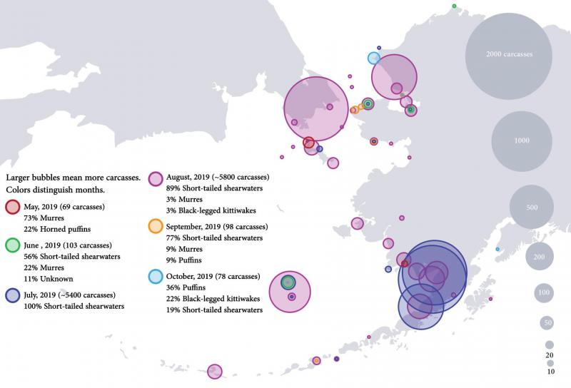 map of seabird die-offs in Alaska