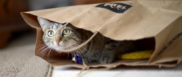 bagai-membeli-kucing-dalam-karung-esai-norman-adi-satria