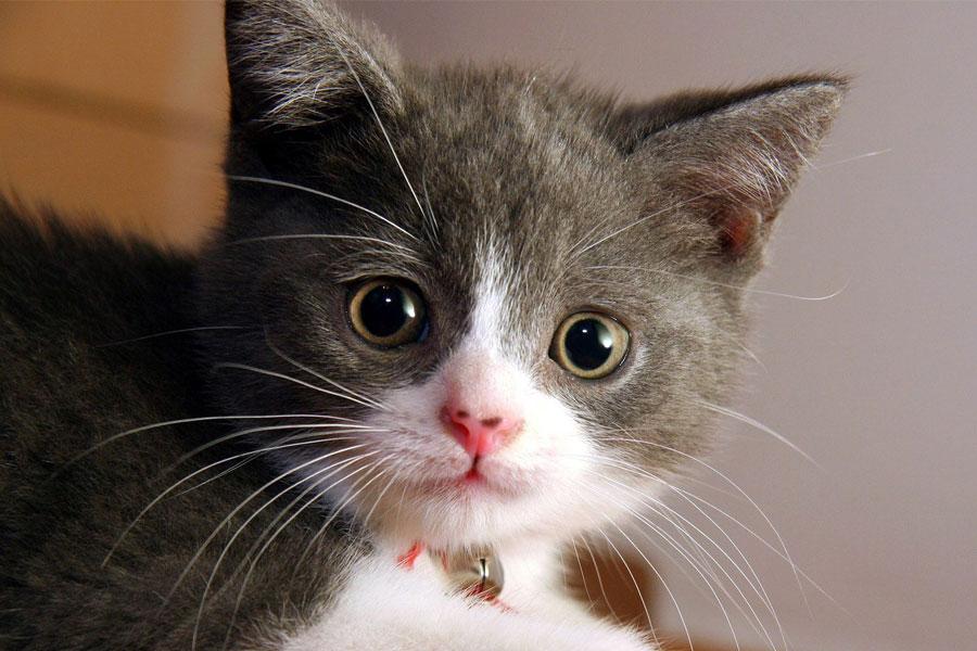 ilustrasi-kucing
