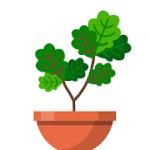 Terrarium Garden Idle v 1.26.4 Hack mod apk (Free Shopping)