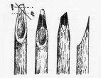 reed-pens