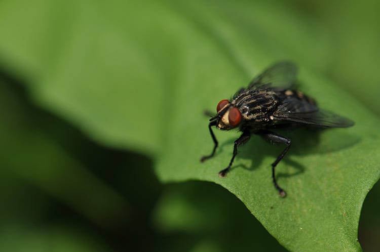 fly-flyability-elios