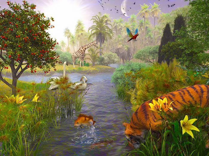 God created plant life, fish, birds, and animals