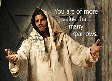 Jesus told His disciples that not even a little sparrow could fall to the ground without His Father knowing about it