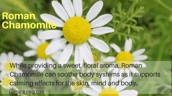 doTERRA Roman chamomile flower