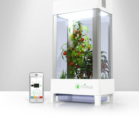Niwa One Smart Indoor Garden