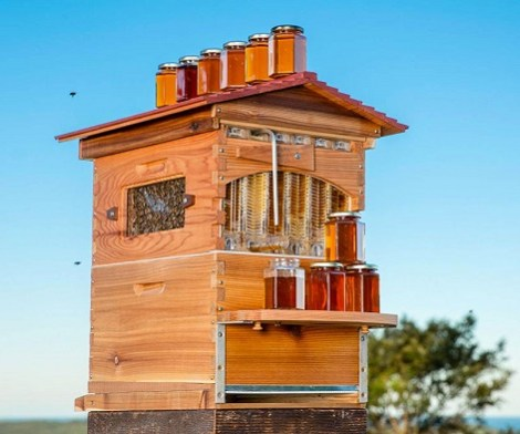 Flow Hive 2 Langstroth Style Beehive