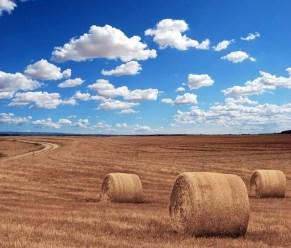 Ubezpieczenie OC rolników