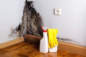 Miten päästä eroon muotin tuoksusta vaatteissa ja talossa