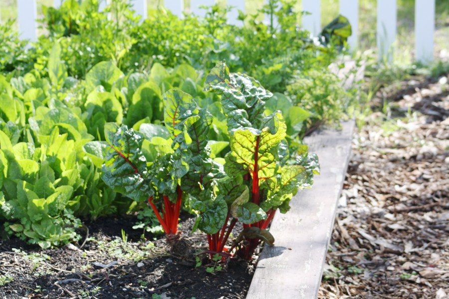 Ten tips for vegetable gardening during a drought   Green Blog   ANR     Photo Credit  Jennifer Baumbach  UCCE Master Gardener Coordinator  Solano  County