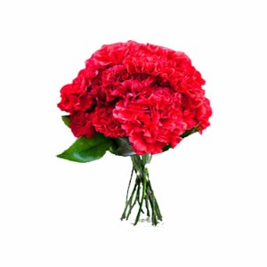15 Red Carnations Hand Bunch